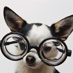 Dog w Glasses